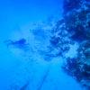 Mergulho no ponto Colombia - Cozumel, México