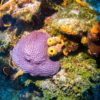 Formações de coral no ponto Colombia - Cozumel, México