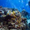 Corais no Arrecife Santa Rosa - Cozumel, México
