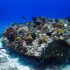 Corais no Arrecife Punta Tunich - Cozumel, México