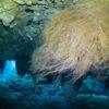 Raíz de uma árvore, dentro do cenote. Grand Cenote - Tulum, México