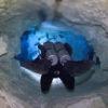 """A parte de cima da foto que parece estar """"embaçada"""", é o encontro da água doce com a água salgada. Cenote Calavera - Tulum, México."""