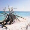 Praia de Chun-Chacaab, no Parque Punta Sur. Cozumel, México.