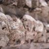 Detalhe da réplica do muro de caveiras no Museu do Templo Mayor - Cidade do México