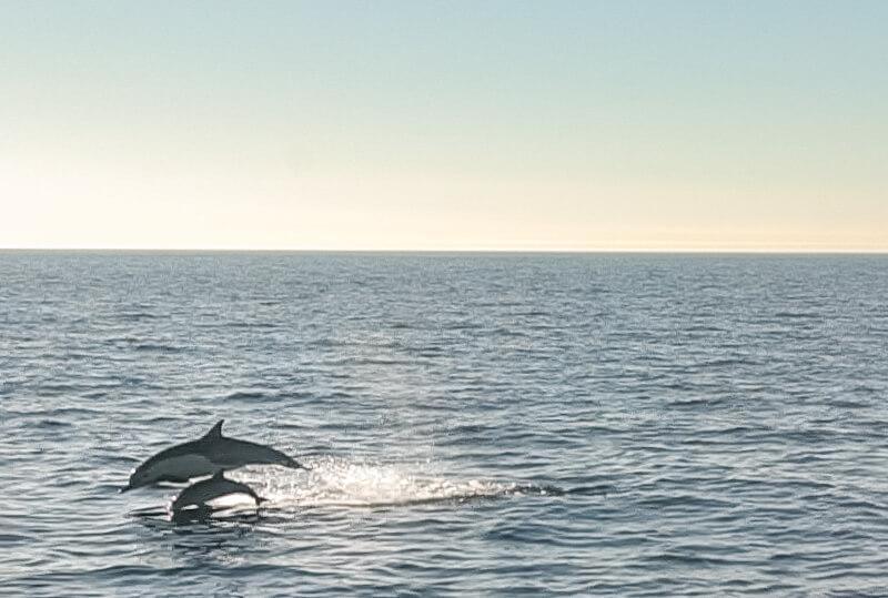 Golfinhos em Oceanside